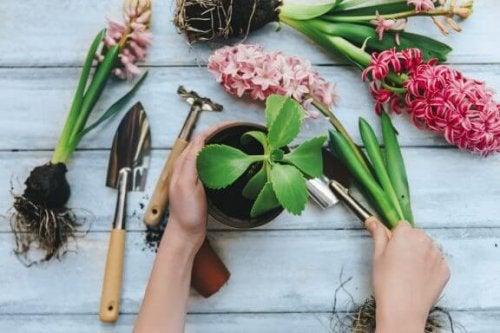 8 gode indendørs planter, du bør kende til