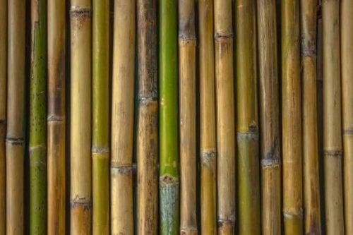 Dekorer dit badeværelse med bambus: Originale ideer