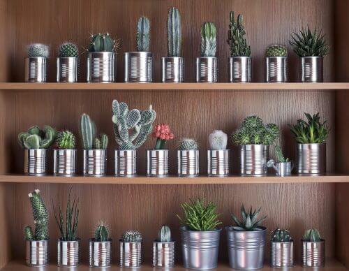 Genbrug blikdåser som potteplanter.