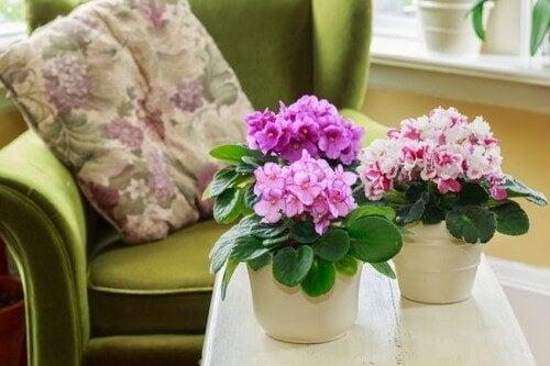 Efterårshave: 3 perfekte planter, du skal tilføje i haven