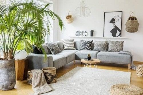 Indendørs palmetræer: Brug disse typer i dit interiør