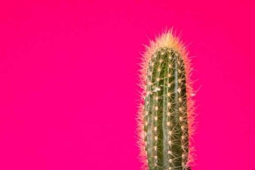 Kend de forskellige typer kaktusser