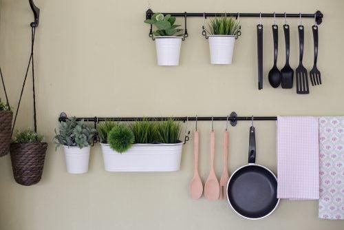 Du kan bruge kaktusser som køkkenplanter