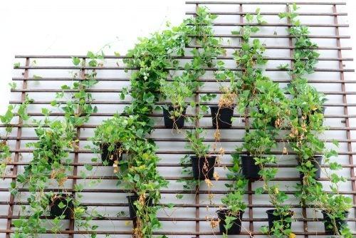 Vægplanter i botanisk indretning.