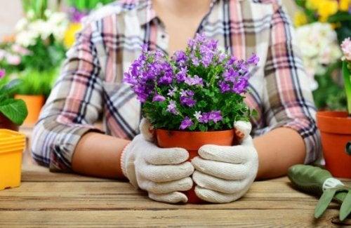 Pynt dine blomsterpotter med sten