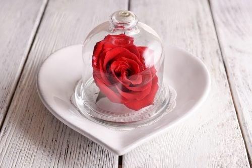 Rose under glasklokke.