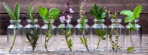 Planter i glaskrukker