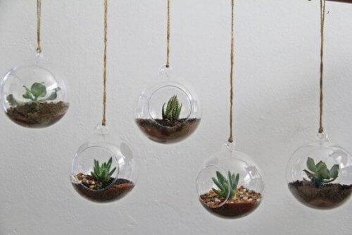 Araceae og aluminiumsplanten: To fantastiske planter til terrarium