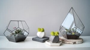 terrarier kan pynte meget med araceae og aluminiumsplanten