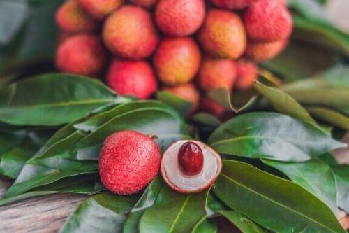 Tropiske planter: Pleje og brug i indretningen