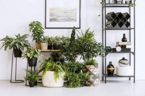 Planter og Feng Shui: Sådan kan det hjælpe dig