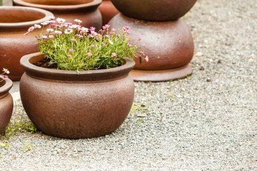 Lergenstande som terracottepotter er ideelle som planteskjulere.
