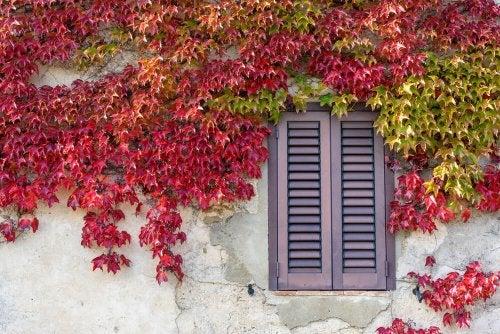 blade i røde og grønne farver på væg