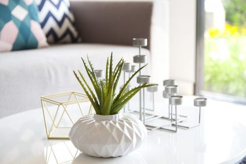 En lille vase med en plante på et bord