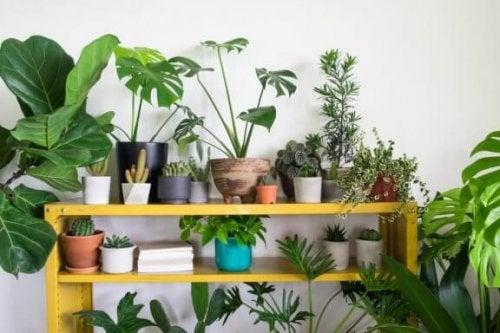 planter på reol