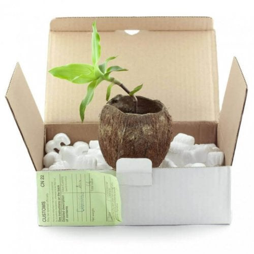 planteskjuler lavet af en papkasse