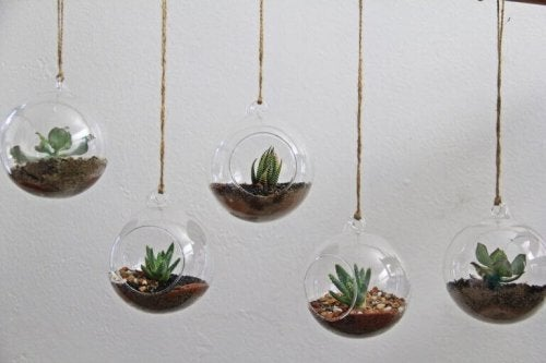 små planter i hængende glaskugler