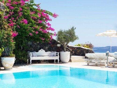 udendørs område med pool og blomsterhæk