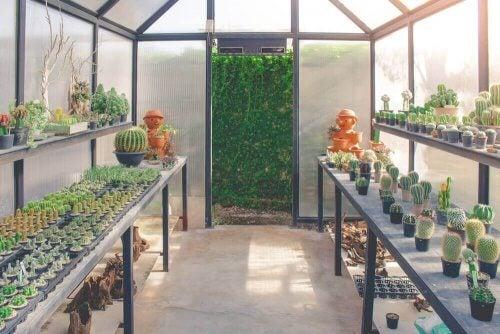 Et drivhus er det ideelle sted til dine planter