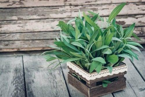 plante til en balkon