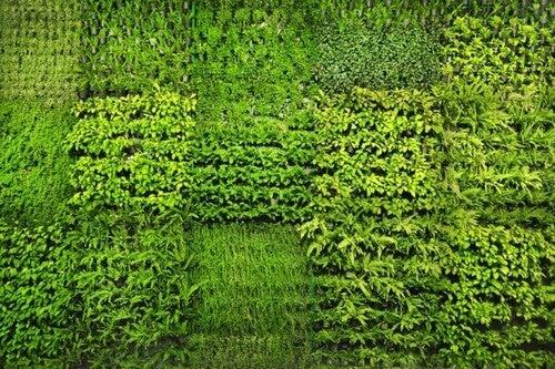 Havemure lavet af plantekasser
