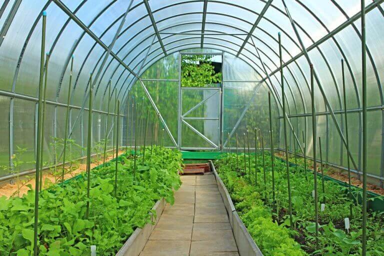 planter i et drivhus