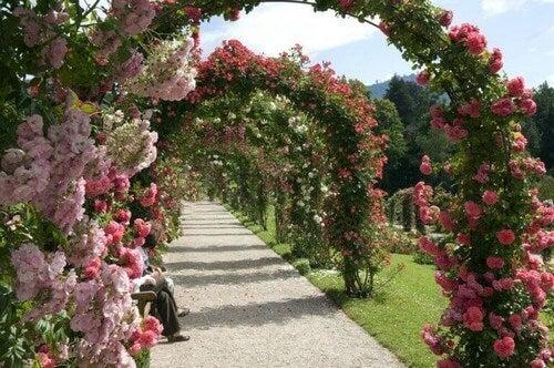 Pynt din have med rosenbuer