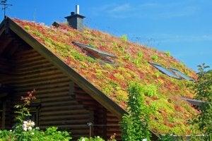 flotte planter på taget