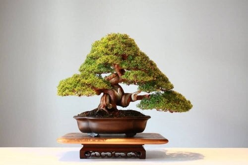Bonsai træer: Smukke små gaver