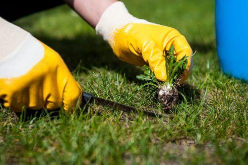 fjernelse af ukrudt i haven