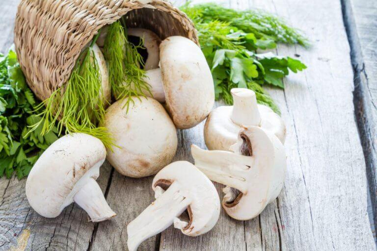 Sådan kan du dyrke dine egne svampe i din have