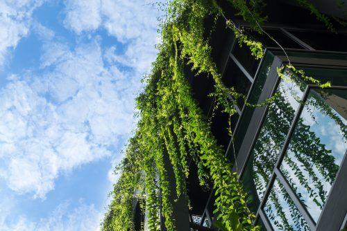hus dækket af planter