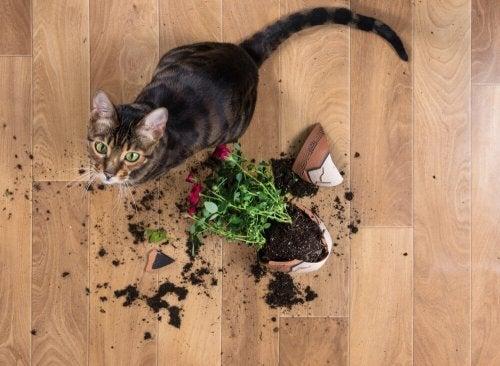 Tips til at holde et hjem med kæledyr rent