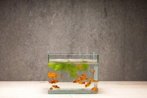 Akvarium med små fisk