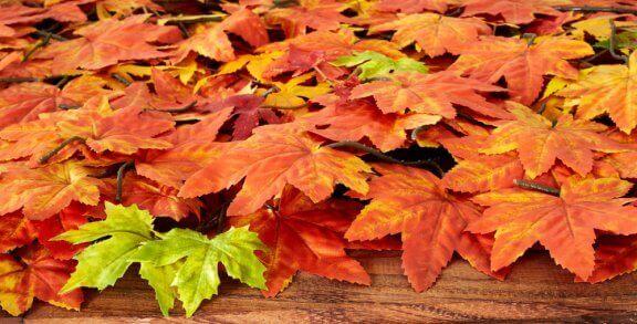 blade i efterårsfarver
