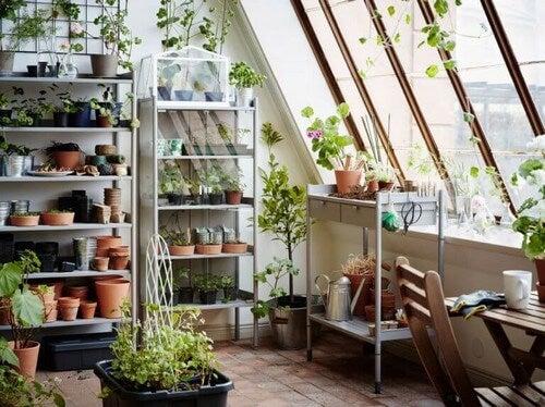 Drivhus med mange urter