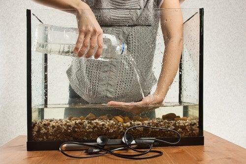 Person vedligeholder sit akvarium