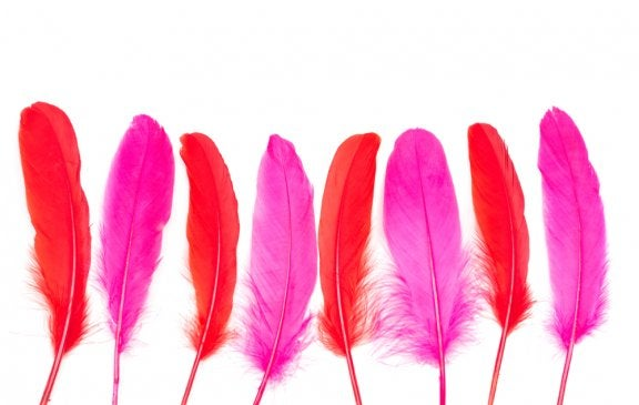 fjer i pink og rød