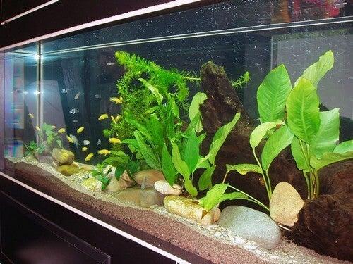 Akvarier med planter
