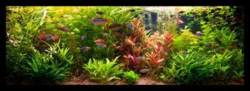 Tips til at have et akvarium derhjemme