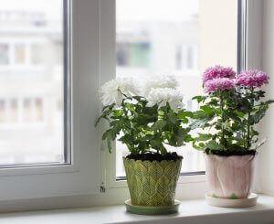 blomster i vindue