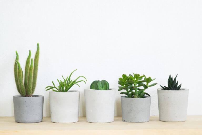 krukker med forskellige planter