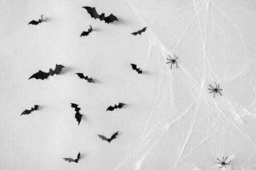 spindelvæv med flagermus