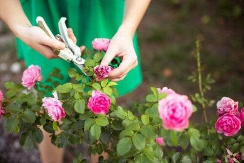 Lær, hvordan du kan beskære din have