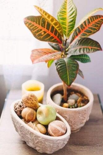 accessories og plante på bord