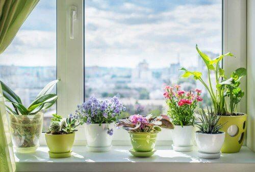 blomster til at skabe dufte i et hjem