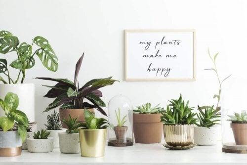 forskellige planter på et bord
