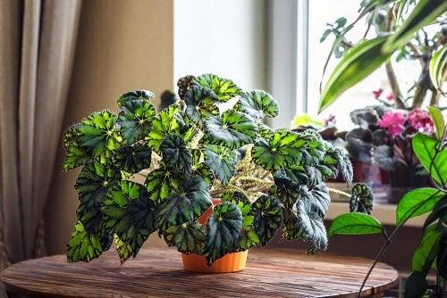 hjem fyldt med planter