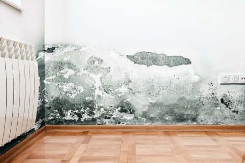 Typer af fugtproblemer, der kan påvirke dine vægge
