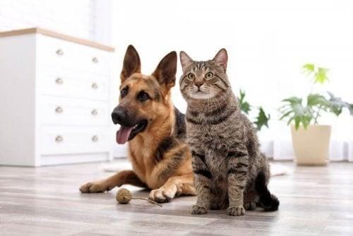 Sådan forhindrer du dit kæledyr i at ødelægge dit hjem
